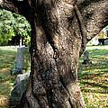 Twisted Tree by Janice Paige Chow