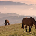 Two Horses Grazing On Mountain Top In Early Mornin by Christiana Stawski