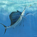 Two Of A Kind Sailfish by Kevin Brant