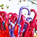 Umbrellas by Tom Gowanlock