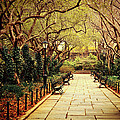 Urban Forest Primeval - Central Park Conservatory Garden In The Spring by Vivienne Gucwa