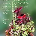 Varigated Leaves in a Pot James 1v12