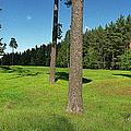 Viking Mound Field by Jan Faul
