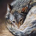 Watchful Rest Print by Elena Kolotusha