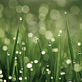 Water Drops On Grass by Florence Barreau
