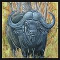 Waterbuffalo by Tod Locke