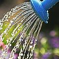 Watering Flowers by Elena Elisseeva