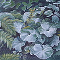 Weeping Ladies Mantle Print by Patsy Sharpe