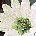 Wet Petals by Artist and Photographer Laura Wrede