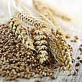 Wheat Ears And Grain by Elena Elisseeva