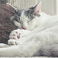 White And Grey Cat Taking Nap On Couch by Cindy Prins