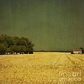 White Barn by Paul Grand