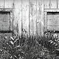 White Windows by Anna Villarreal Garbis