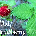 Wild Strawberry Poster