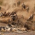 Wildebeest And Zebra by Marsch1962UK