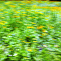 Wildflowers And Wind 2 by Skip Nall