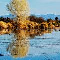 Wildlife Refuge Reflection by La Rae  Roberts