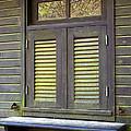 Window And Moss by Carlos Caetano
