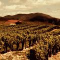 Wine Country by Peter Tellone