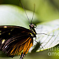 Wings by Leslie Leda