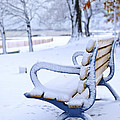 Winter bench Print by Elena Elisseeva