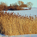 Winter Breeze by Aimee L Maher Photography and Art Visit ALMGallerydotcom