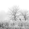 Winter Day by Julie Palencia