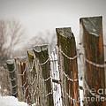 Winter Fence by Sandra Cunningham