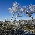 Winter Landscape.  Auvergne. France by Bernard Jaubert