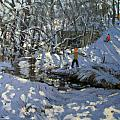Winter Stream by Andrew Macara