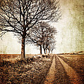 winter track with trees Print by Meirion Matthias