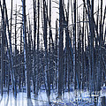 Winter Trees Print by Artist and Photographer Laura Wrede