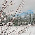 Winter Woods by Joann Vitali