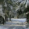 Winter's Tranquility by Debra Straub