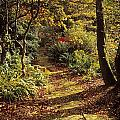 Woodland Path, Mount Stewart, Ards by The Irish Image Collection
