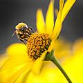 Working Bee by Pavlo Kolotenko