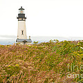 Yaquina Head Lighthouse In Oregon by Artist and Photographer Laura Wrede