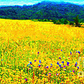Yellow Hills . Long Cut by Wingsdomain Art and Photography