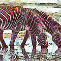 Zebras by George Rossidis