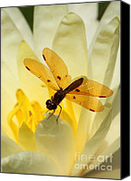 Dragon Photo Canvas Prints - Amber Dragonfly Dancer Canvas Print by Sabrina L Ryan
