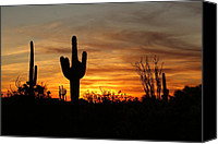 Desert Canvas Prints - Arizona Saguaro Cactus Sunset Canvas Print by Michael J Bauer