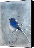 Snow Canvas Prints - Blue Bird  Canvas Print by Fran J Scott