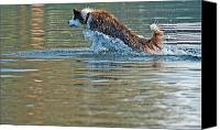 Water Retrieve Canvas Prints - Dog running in water Canvas Print by Jan Marijs