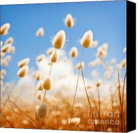 Tim Hester Canvas Prints - Golden Field Canvas Print by Tim Hester