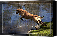 Diving Dog Canvas Prints - Into The Water Canvas Print by Alice Gipson