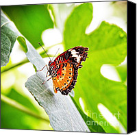 Grace Photo Canvas Prints - Leopard Lacewing butterfly Canvas Print by Jane Rix