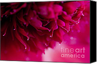 Stamen Macro Photo Special Promotions - On The Edge Canvas Print by Nick  Boren