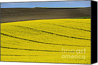 Rape Canvas Prints - Agricultural landscape.  Canvas Print by Bernard Jaubert