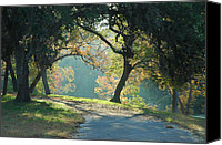 Wimberley Canvas Prints - Morning  Light Canvas Print by Robert Anschutz