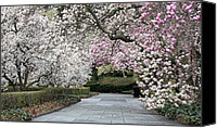 Magnolias Canvas Prints - The Walk Canvas Print by JC Findley